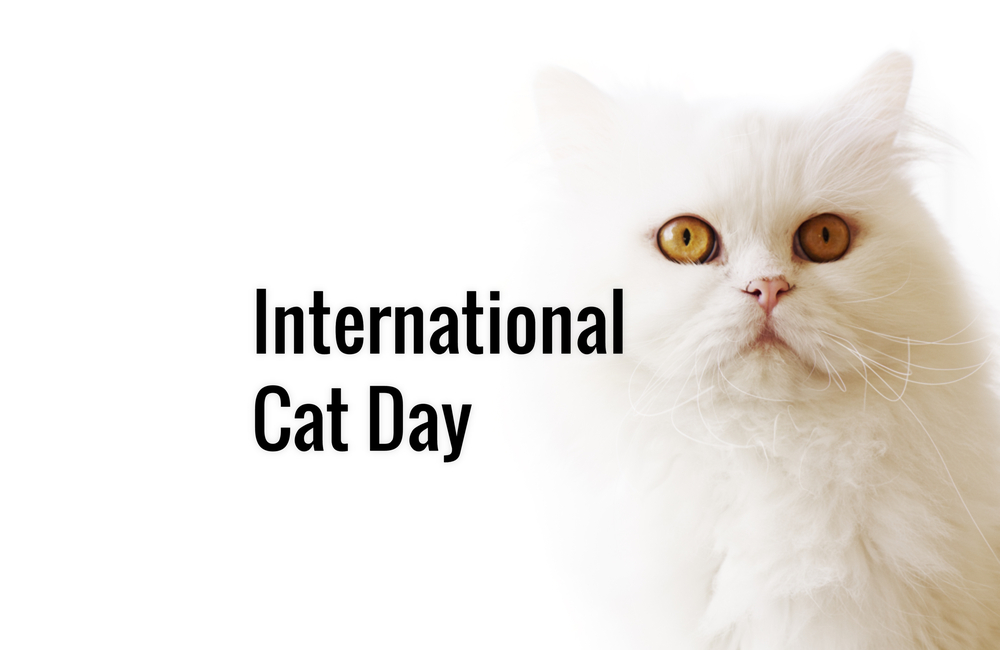 International Cat Day In 2020 2021 When Where Why How Is Celebrated