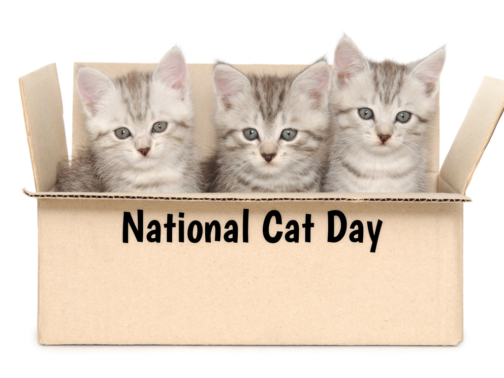 National Cat Day In 2020 2021 When Where Why How Is Celebrated