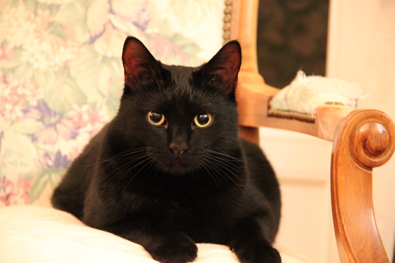 Attitude towards black cats in different countries